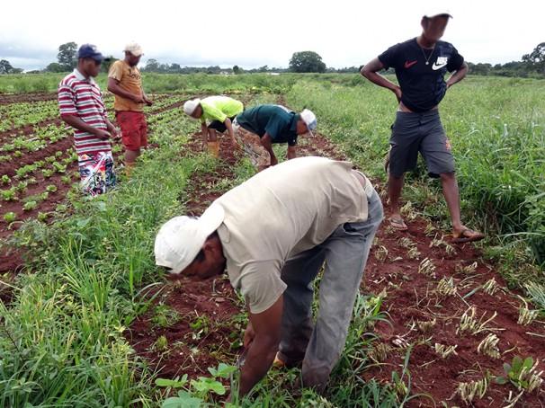 Vítimas trabalhavam agachados durante horas para colher produção de hortaliças (Fotos: MTE)
