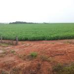 Fazendeiros do centro-oeste tiveram acesso a praticamente R$ 4 bilhões na última safra