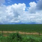 No Araguaia, os campos de soja vão até o horizonte. Plantações ocupam áreas bastante extensas