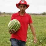 Fruticultura diversificada impulsiona economia