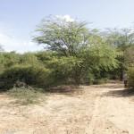 O verde começa a tomar conta na entrada de área irrigada