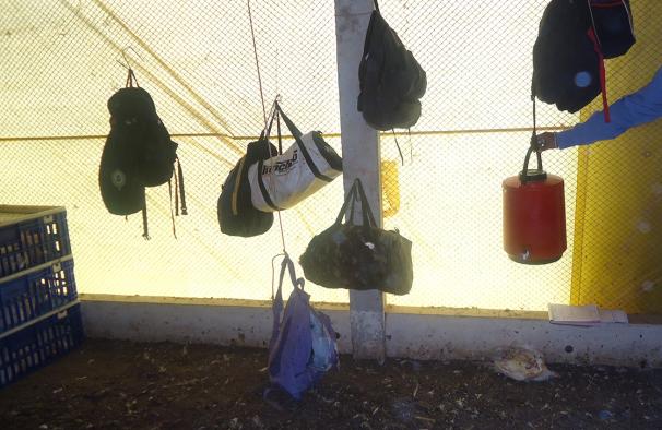 Pertences de trabalhadores junto a animal morto em avícola da Mauricéia em Barreiras (BA)