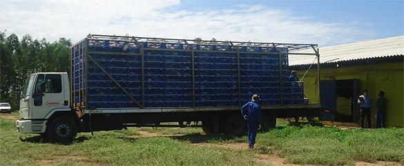 Caminhão da avícola Mauricéia carregado de frangos