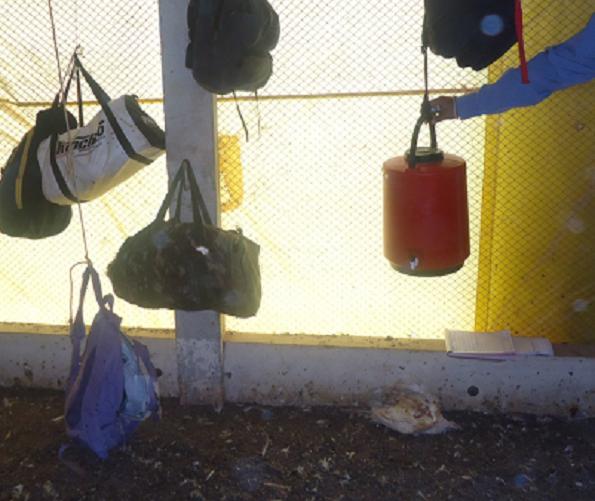 Pertences dos trabalhadores eram deixados no aviário, próximo a animais mortos e com alto risco de contaminação. Foto: MTE