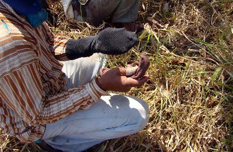 Trabalhador improvisava luva com meias velhas para aplicar agrotóxico em fazenda no MS