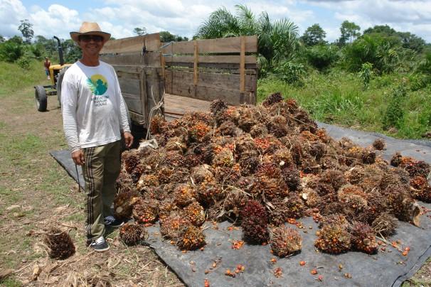 Mais de duas mil familias devem plantar dendê para industrias até o fim de 2013