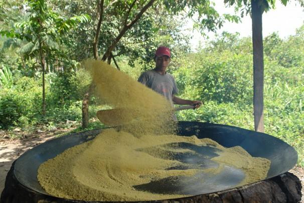 Dendê tem substituido roças; este ano, preço da farinha de mandioca foi o mais alto da história no Pará