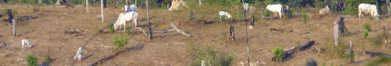 Um em cada dez integrantes da 'lista suja' tem terra embargada pelo Ibama