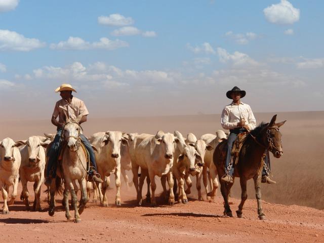 Quase metade do total de novos integrante da 'lista suja' exerce a atividade pecuária (Foto: Verena Glass)