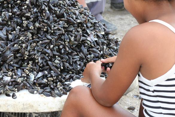 Menina trabalha na coleta de sururus, em Recife (PE) (Foto: Igor Ojeda)