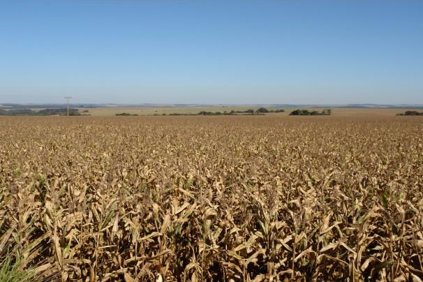Campo de soja no Mato Grosso do Sul (Foto: Verena Glass)