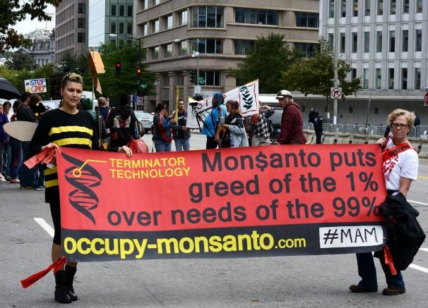 """Em outubro, manifestações contra transgênicos ocorreram em 57 países. Em Washington, nos Estados Unidos, cartaz destaca a tecnologia terminator: """"A Monsanto coloca a ganância dos 1% sobre as necessidas dos 99%"""" (Foto: Stephen Melkisethian/Flickr)"""