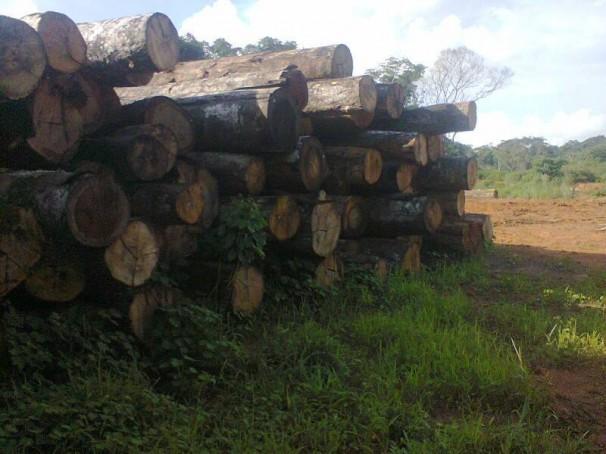 Imagem atual da política do desenvolvimento sustentável na área onde Chico Mendes realizou o último empate de sua vida, no seringal Cachoeira.   Foto: Dercy Teles