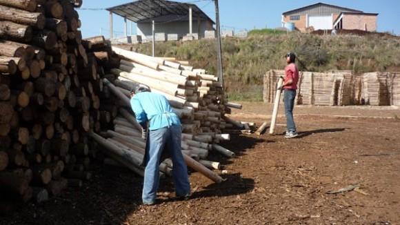 Trabalho infantil irregular e insalubre é encontrado em seis empresas do município de Mariópolis, no interior do Paraná (Foto: MPT-PRT9)