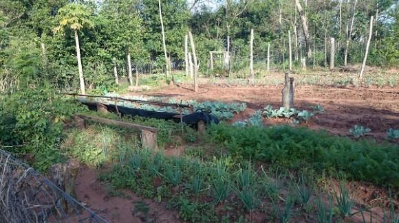Horta da família Castro, em terreno próximo à plantação de soja organizada por Blas Riquelme.