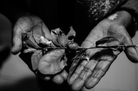 Foto 1 - Dona Tereza segurando folha de chá preto da india, Lavras Novas MG (1)