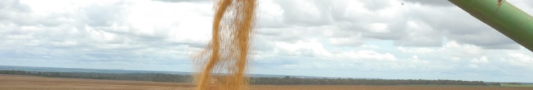 No Mato Grosso, a agricultura familiar se aproxima do agronegócio