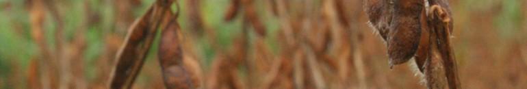 Agronegócio da soja domina produção de biodiesel no Mato Grosso