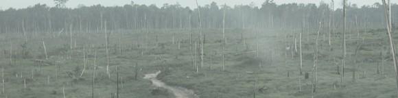 Área de desmatamento em que atuavam resgatados do trabalho escravo na Amazônia