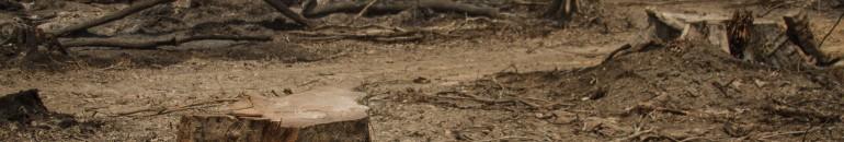 Derrubar árvores para erguer hidrelétricas