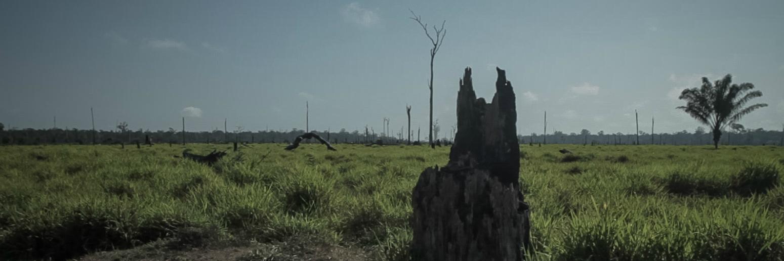 desmatamento