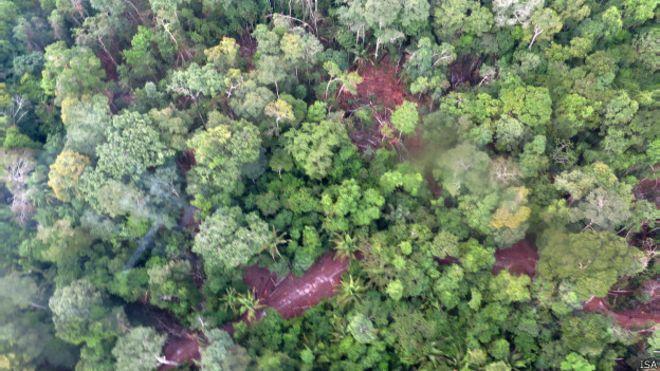 """Retirada de árvores na TI Cachoeira Seca deixa """"buracos"""" na floresta. Foto: Juan Doblas/ISA"""