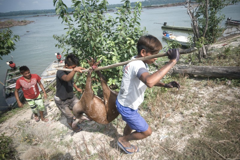 Jovens munduruku carregam animal que vai alimentar os participantes da assembleia. Os indígenas dependem da caça para sobrevivência (Foto: Anderson Barbosa / Fractures Collective)