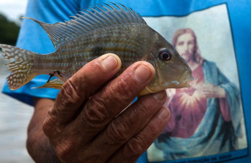 Pescador ornamental, seu Miga mostra o igapó onde encontra os peixes que vende para aquários . Foto: Lilo Clarete/Repórter Brasil