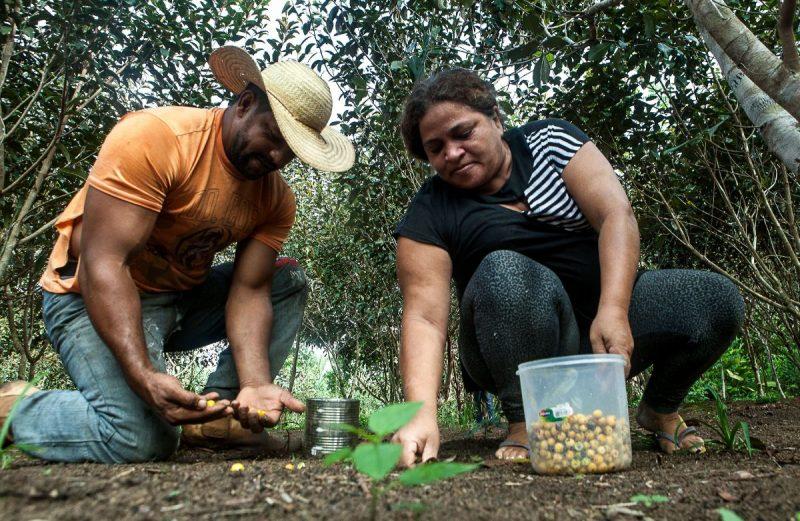 Daniel e Osvalinda no sítio que levaram 14 anos para construir no assentamento: plantação de frutas, flores, apiário e galinheiro. Foto: Lilo Clareto/Repórter Brasil