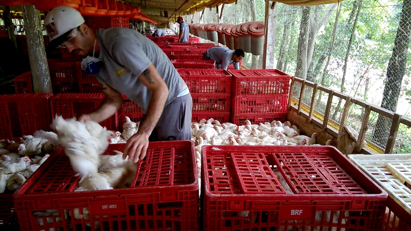 Ausência de carteira assinada, jornadas excessivas e condições insalubres são apenas alguns dos problemas enfrentados pelos trabalhadores da apanha. Foto: André Campos
