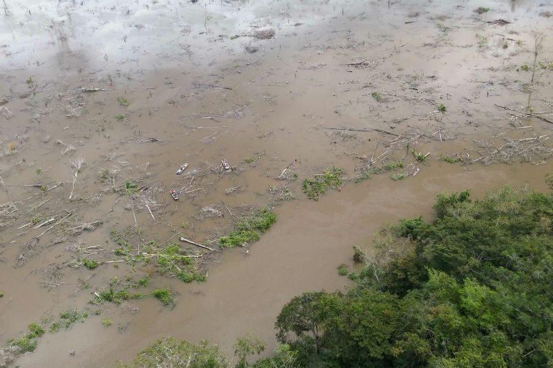 Árvores dentro do lago foram principal motivo da morte dos peixes em Teles Pires. Foto: Ibama