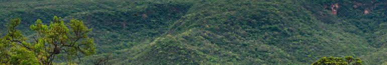 Demanda mundial por papel higiênico amplia desmatamento no cerrado brasileiro