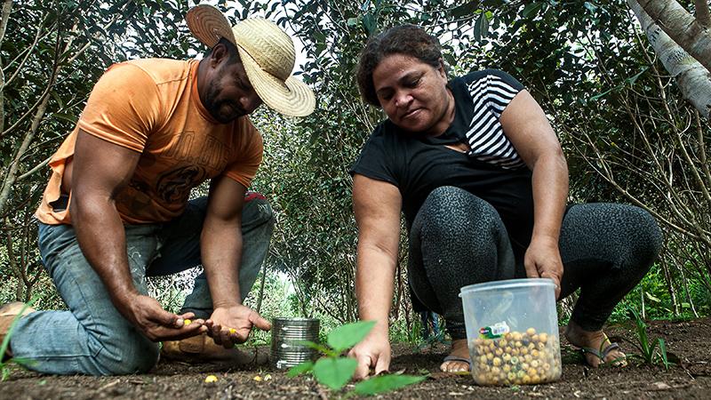 Os assentados Osvalinda e Daniel cultivam a roça dentro do assentamento. O lote do casal é um dos mais preservados do local. Fotografia: Lilo Clareto/Repórter Brasil