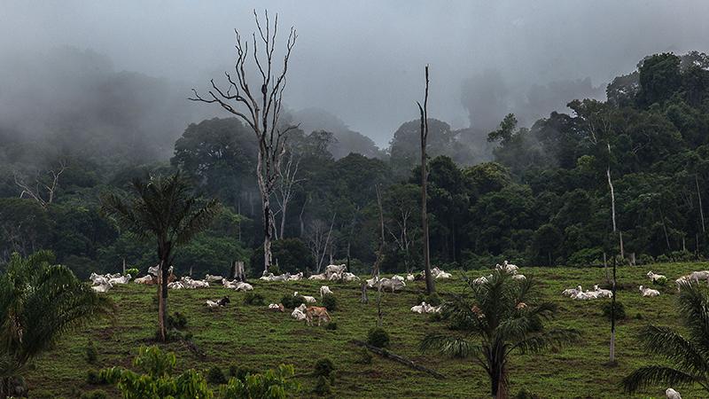 Na região do Tapajós, no Pará, sobe o tom contra lideranças rurais que não cedem aos interesses de madeireiros, garimpeiros e fazdendeiros. Fotografia: Lilo Clareto/Repórter Brasil