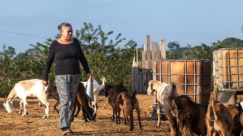 Raimunda alimenta as cabras, ela diz que os animais na sua fazenda servem para alimentar seus funcionários