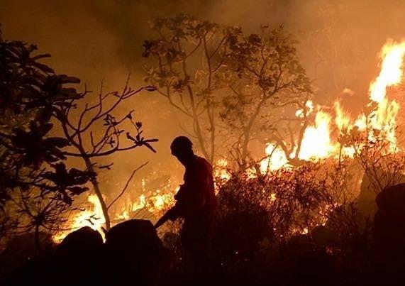 Os Interesses Econômicos Por Trás Da Destruição Da Amazônia