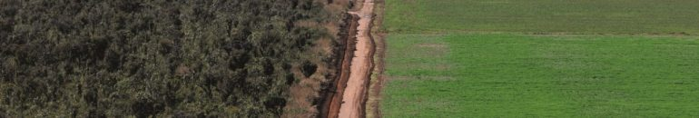 Deforestation in the Cerrado: control by meatpackers is worse than in the Amazon