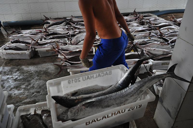 A caminho da carreta frigorífica, na Barra do Itabapoana. Foto: João Cesar Diaz/Repórter Brasil