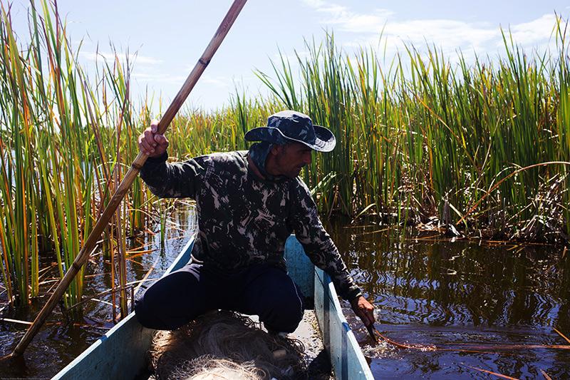 O pescador Marcos Peixoto consegue perceber onde estão os peixes saúbas escondidos sob a vegetação que flutua Lagoa de Iquipari. Foto: Gustavo Lousada/Repórter Brasil