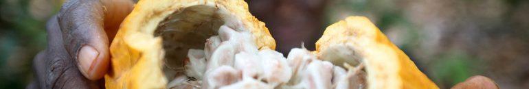 Barry Callebaut, Cargill e Olam são foco de novo 'Monitor' sobre indústria do cacau