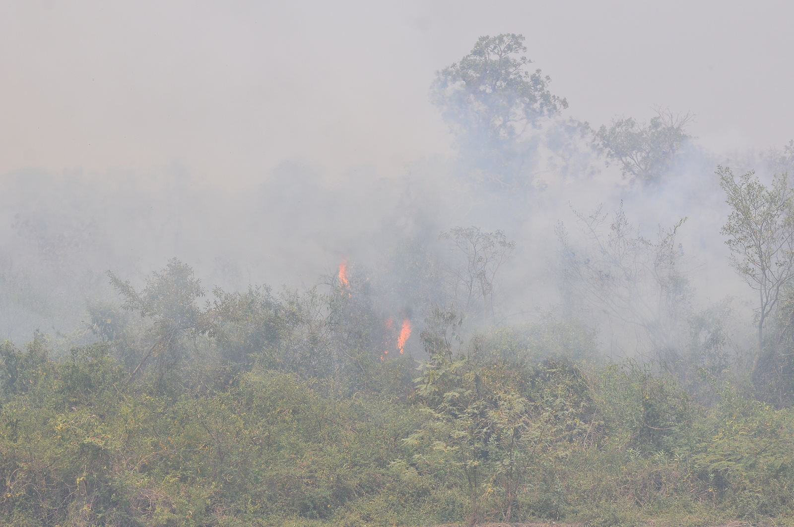 Cerca de 20% do bioma foi destruído pelas queimadas recordes deste ano (Álvaro Rezende/Repórter Brasil)