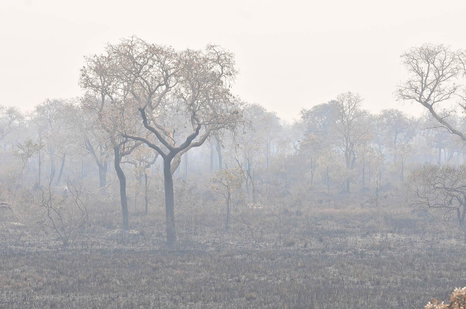 No Pantanal, perto de Corumbá (MS), não há sinal de azul no céu, apenas fumaça e fuligem (Álvaro Rezende/Repórter Brasil)
