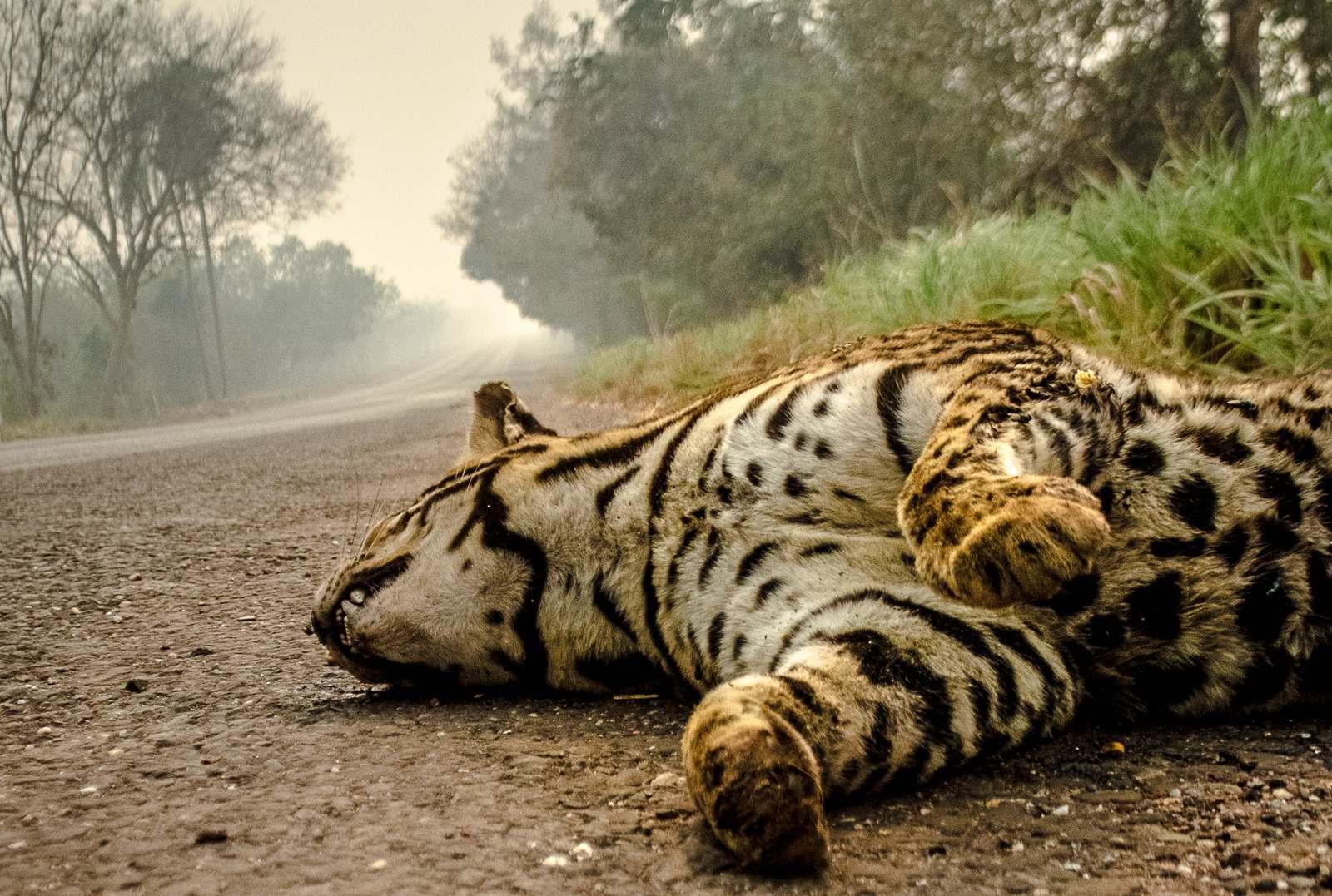 Ninguém quer ver de perto a morte que o fogo traz para o Pantanal. Eu vi'