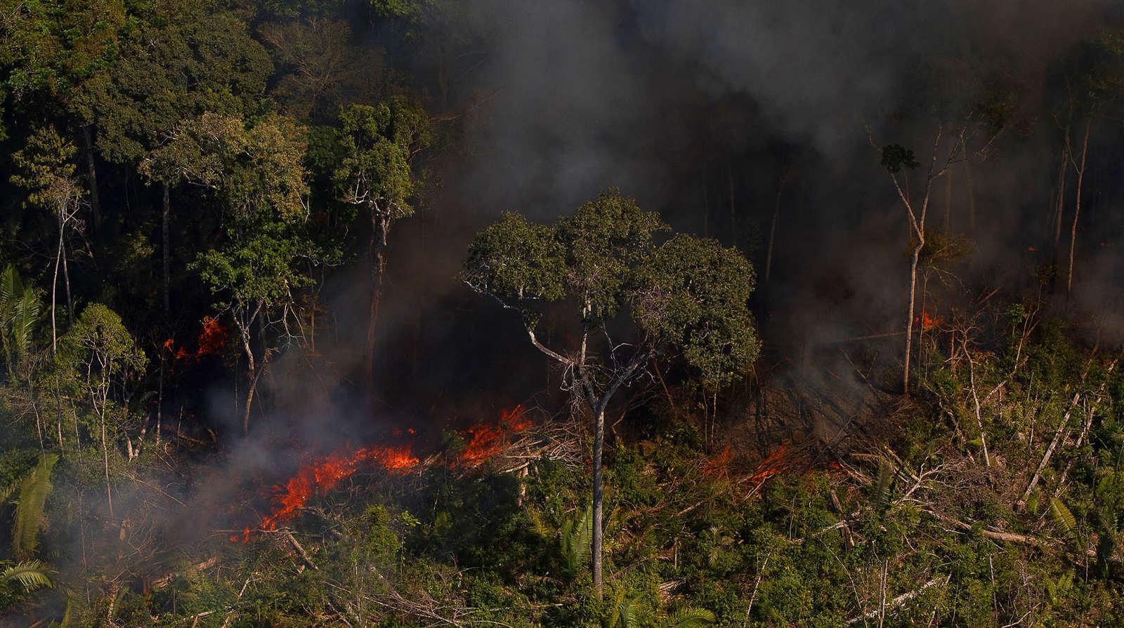 Prática recorrente entre fornecedores da JBS, o desmatamento é uma das principais causas do aquecimento global (Bruno Kelly/Amazônia Real)