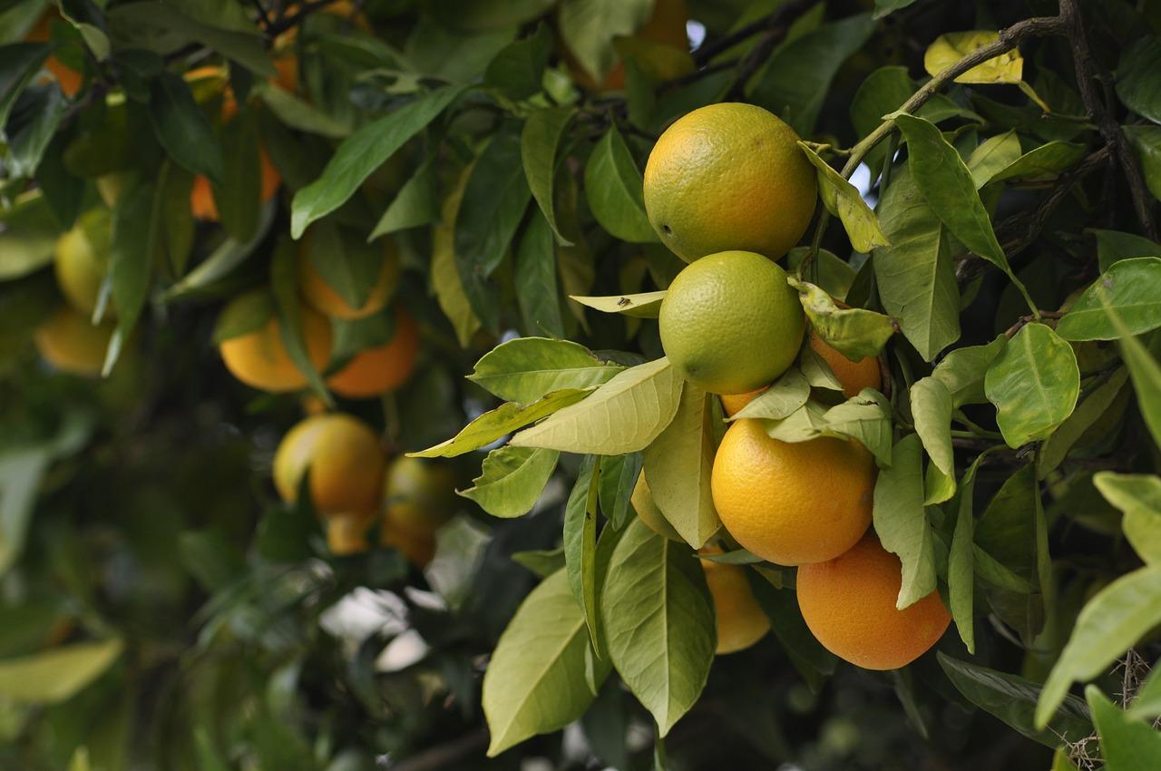 Para promotor, Reforma Trabalhista de 2017 abriu brecha para tornar os trabalhadores do setor da laranja ainda mais vulneráveis à exploração (Mac231/Pixabay)