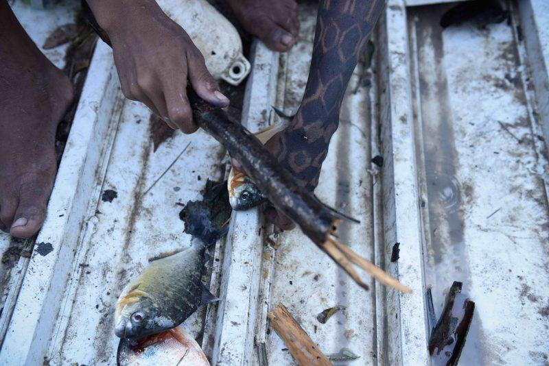 Modo de vida dos Munduruku, diretamente ligado à pesca, é ameaçado com a contaminação (Greepeace)