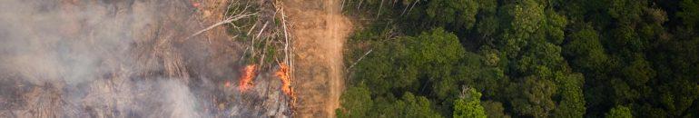 Coalizão Florestas & Finanças atualiza banco de dados de financiadores por trás do desmatamento